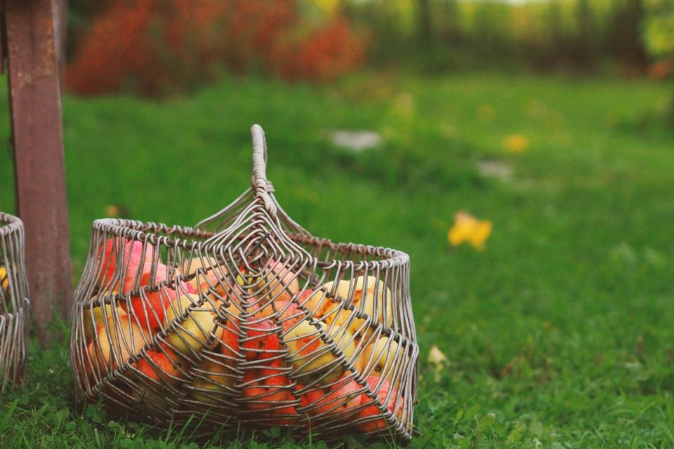Immunerősítés ősszel